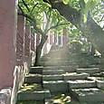 木漏れ日の中の階段
