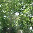 木がいっぱい